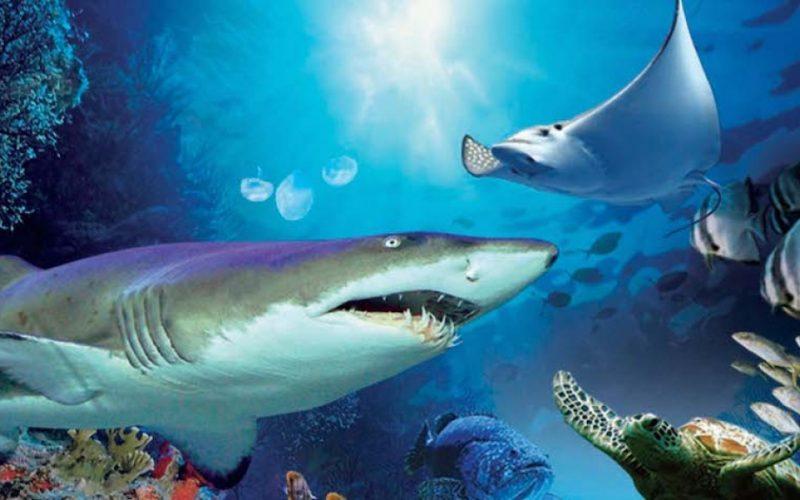 aquaria-klcc-061-1214x575